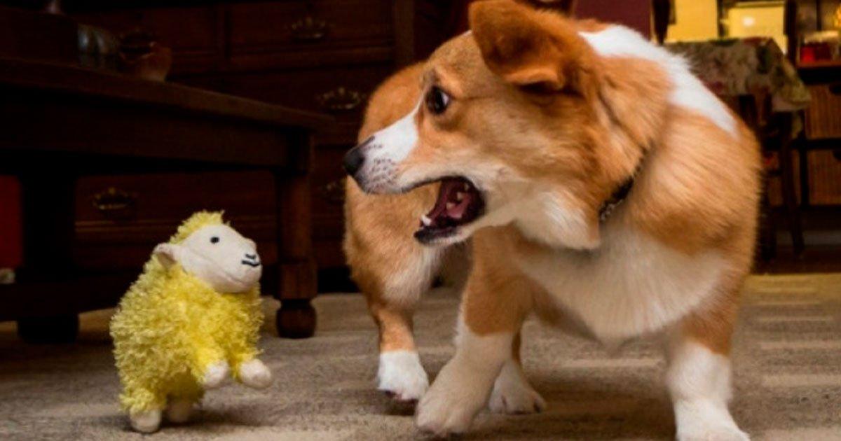 2 312.jpg?resize=1200,630 - 18 Personas que consiguieron un perro para sentirse más seguros
