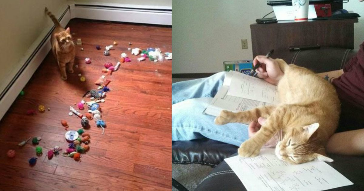 2 321.jpg?resize=1200,630 - 30 hilarious struggles only cat owners will understand