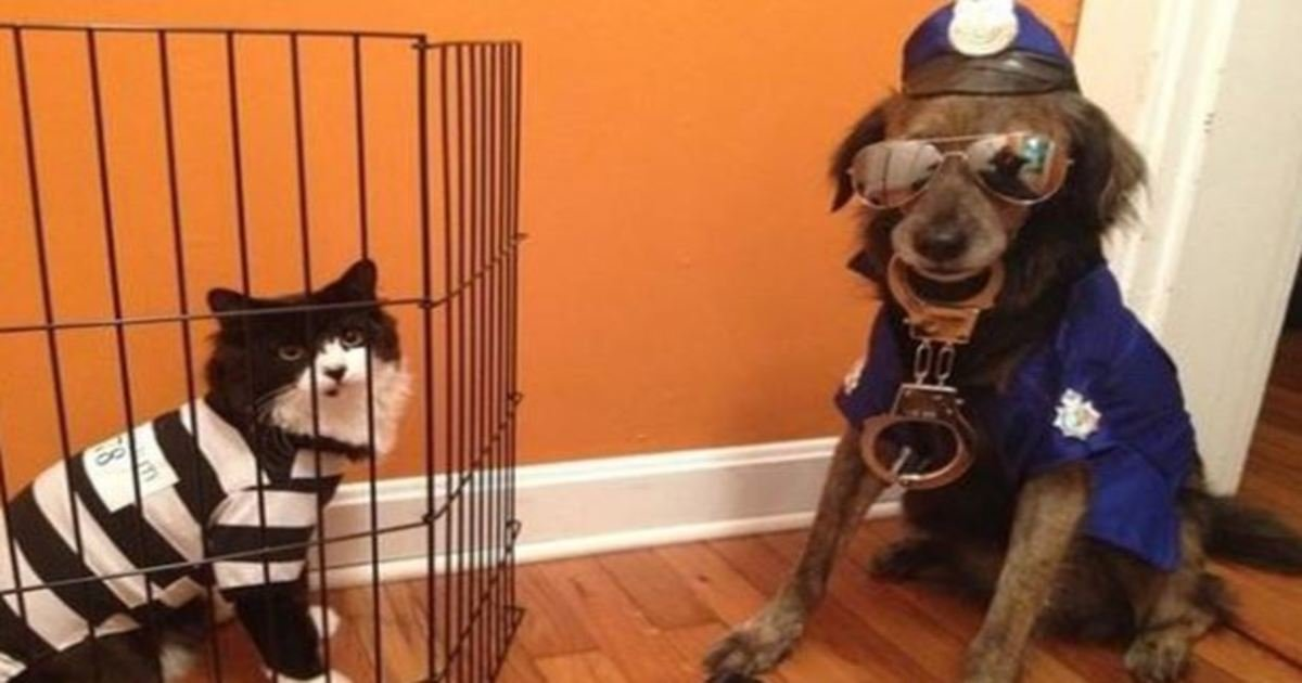 2 83.jpg?resize=636,358 - 21 Awesome Duo Costumes For Two Pets