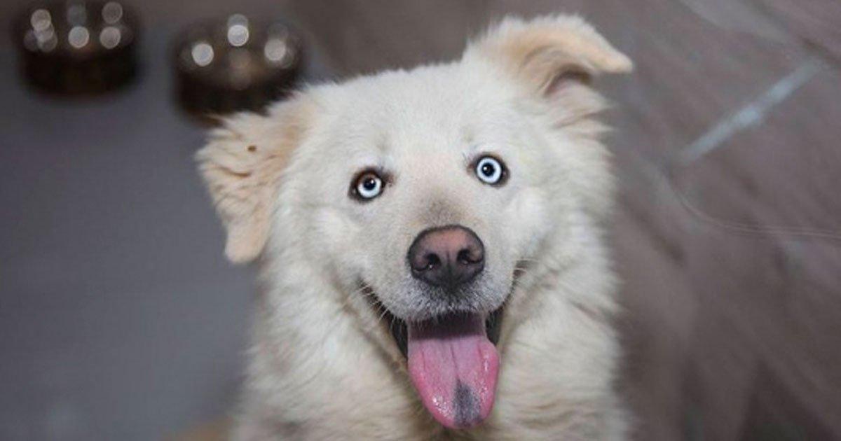 "20 18.jpg?resize=1200,630 - 17 Personas que adoptaron a una mascota espontáneamente, solo porque sintieron que era ""la indicada"""