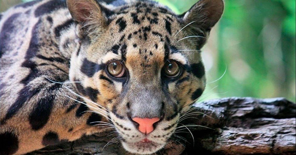 20 23.jpg?resize=1200,630 - Los 16 felinos más raros del mundo