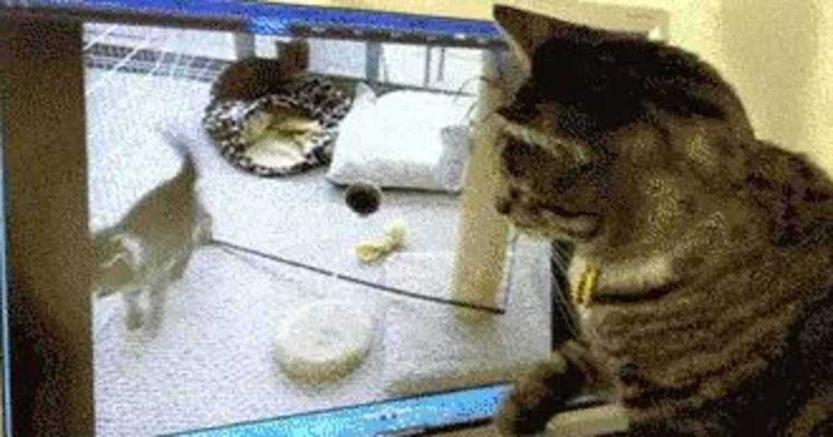 20 26.jpg?resize=1200,630 - 21 Cats That Are Losing the Battle Against Technology