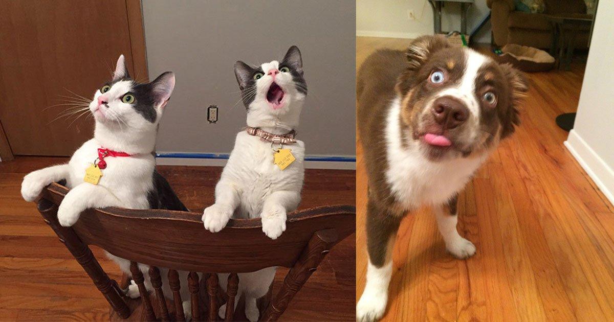 20 times when animals have the funniest reactions.jpg?resize=412,232 - Les 20 réactions d'animaux les plus drôles !