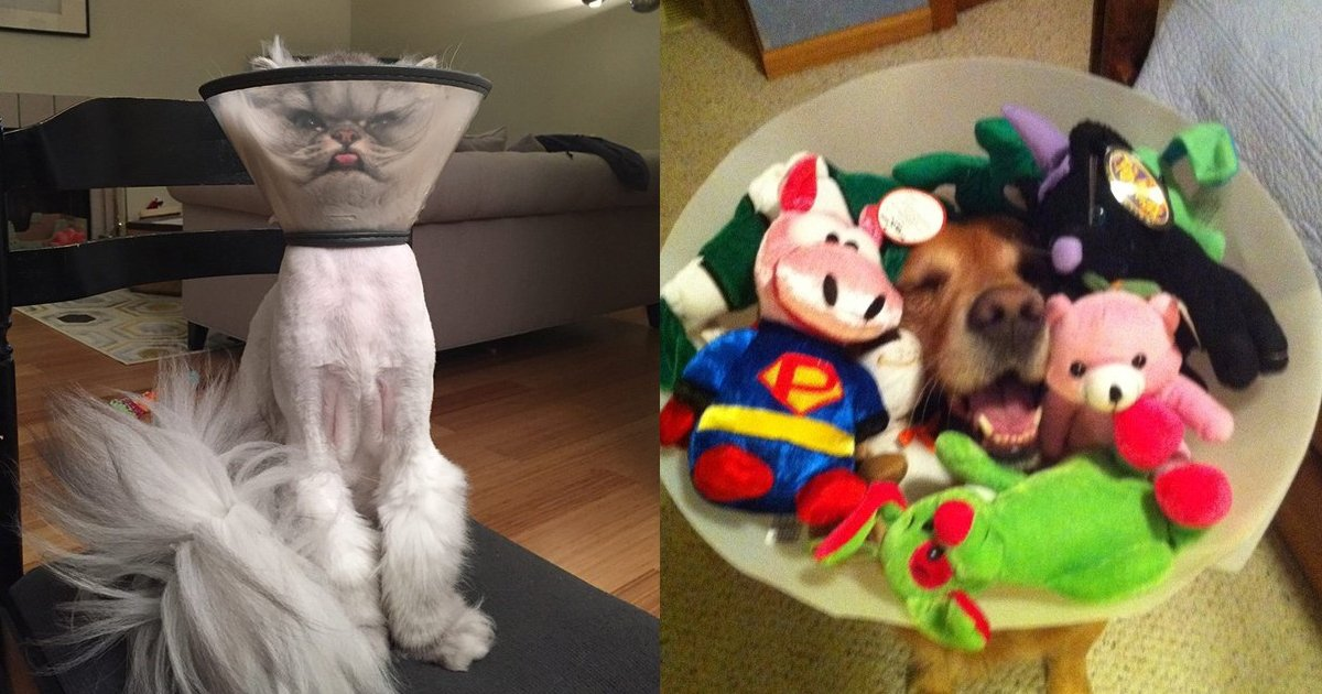 21 8.jpg?resize=1200,630 - 31 Hilarious Pets Who Have Been Cone-Of-Shamed