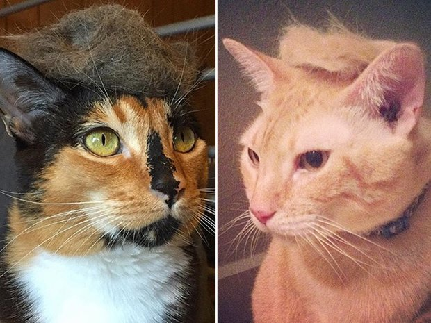 cat-hairstyle-12