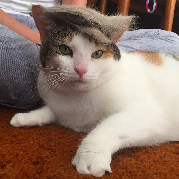cat-hairstyle-18
