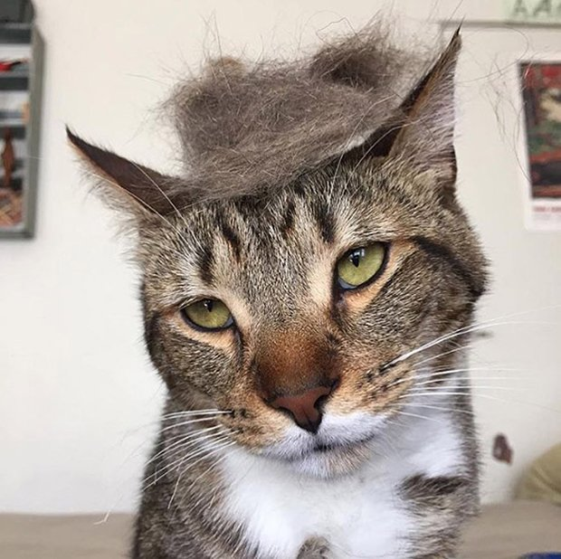 cat-hairstyle-4