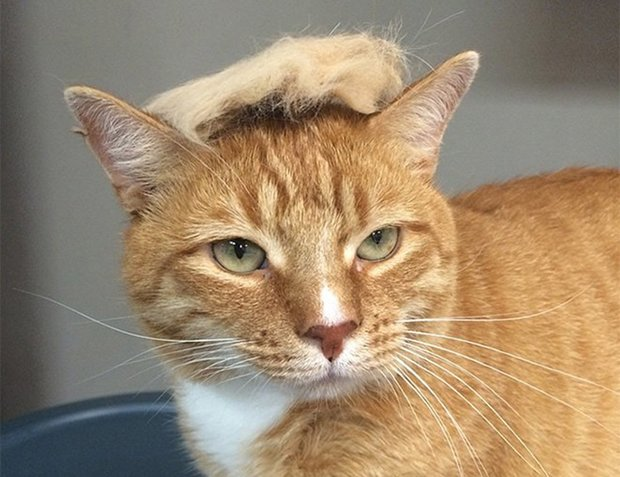 cat-hairstyle-5