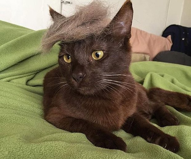cat-hairstyle-7