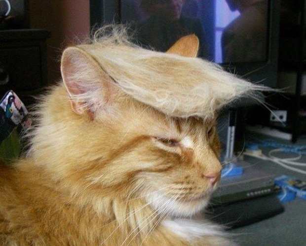 cat-hairstyle-1