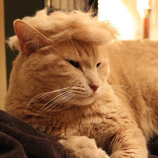 cat-hairstyle-8