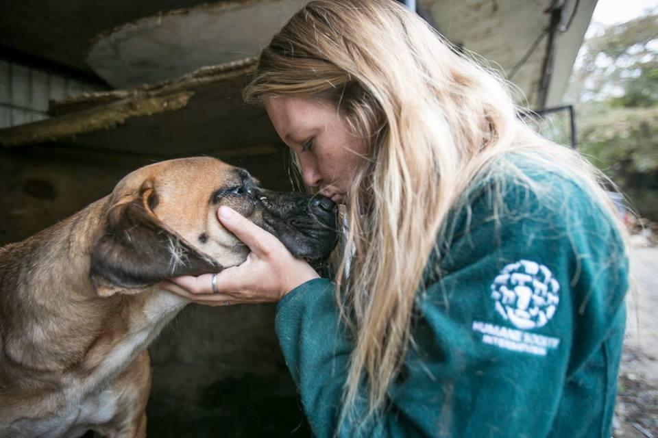 23915596 10156102441442262 37833059759800057 n.jpg?resize=1200,630 - 170 chiens destinés à la consommation sauvés d'une ferme canine en Corée du Sud.