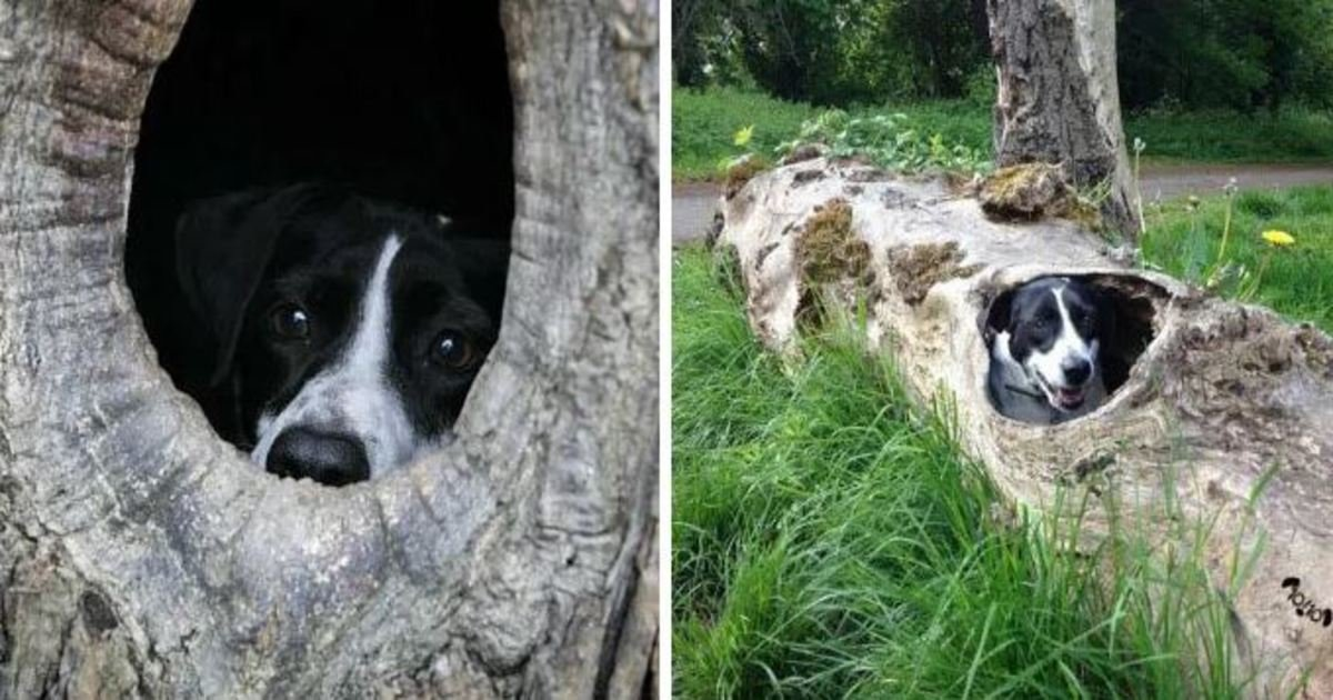 26 2.jpg?resize=636,358 - 20 Hilarious Responses From 'We Rate Dogs' After People Failed to Send Dog Photos