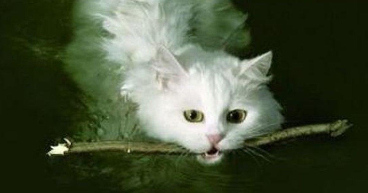 3 120.jpg?resize=1200,630 - 17 Datos sobre los gatos que te harán amarlos aún más