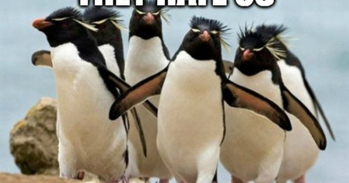 3 138.jpg?resize=1200,630 - 24 Memes That Prove Penguins Are The Funniest Animals On Earth