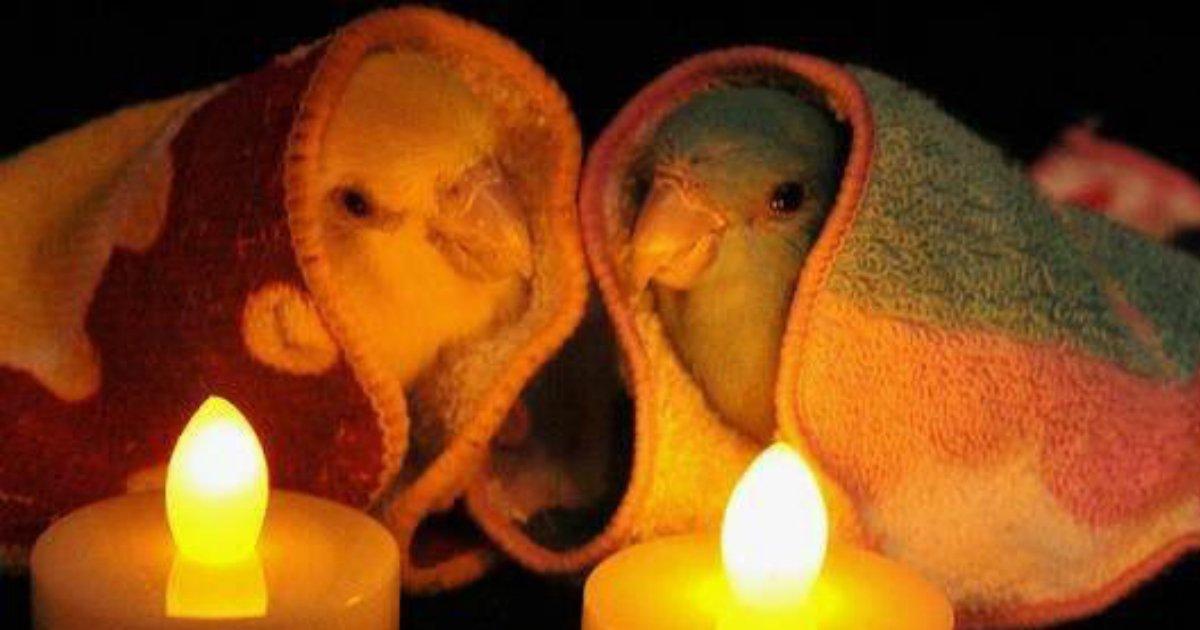 3 197.jpg?resize=1200,630 - 21 Of The Internet's Sweetest Bird Friends