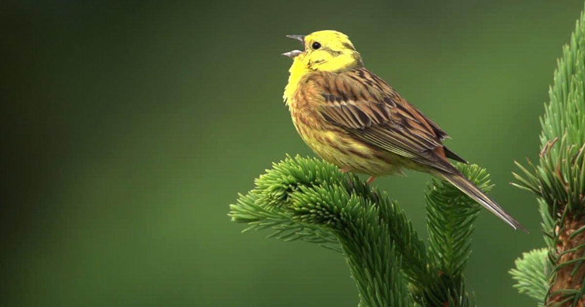 """3 22.jpg?resize=1200,630 - 11 Sorpresas de la naturaleza que te harán gritar """"¡¿Es en serio?!"""" (basta con ver los pájaros borrachos)"""