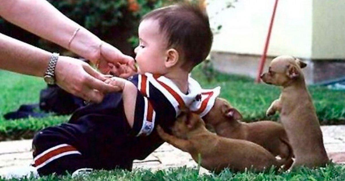 3 268.jpg?resize=1200,630 - 16 Animales que saben ayudar a los demás