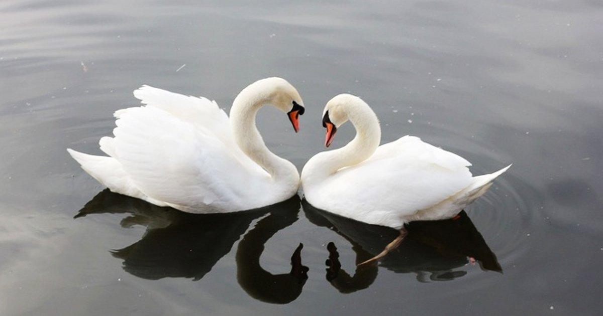 3 70.jpg?resize=1200,630 - Monogamia en la naturaleza. Estos 10 animales eligen una pareja para toda su vida