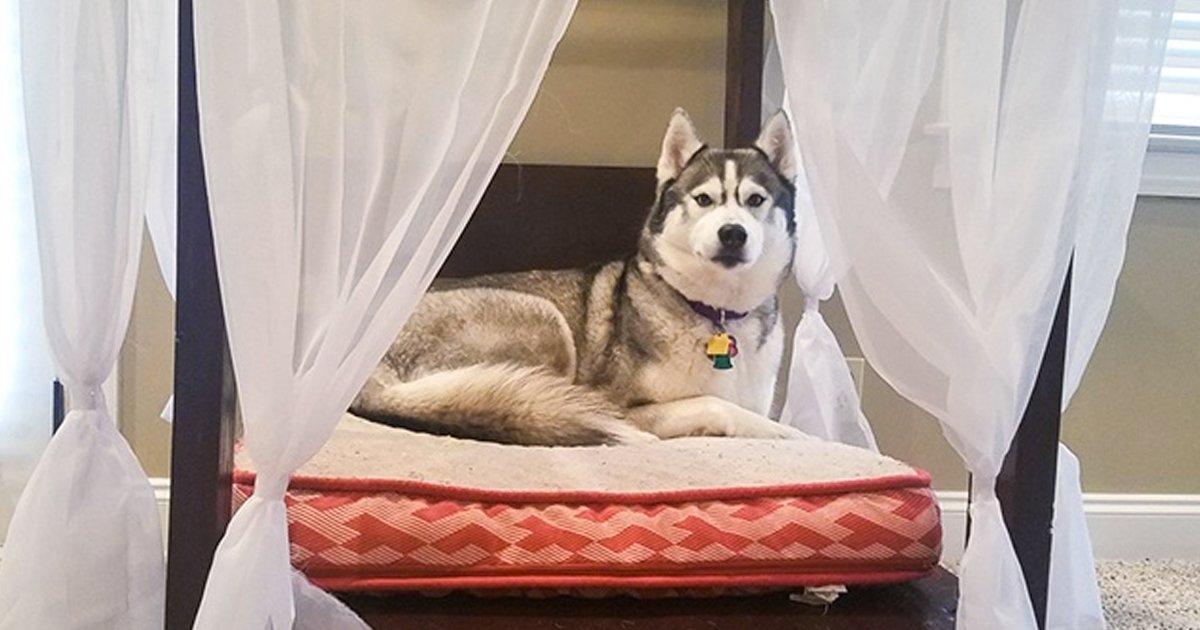 3 87.jpg?resize=636,358 - 19 Dueños cariñosos que hacen todo por sus perros y gatos
