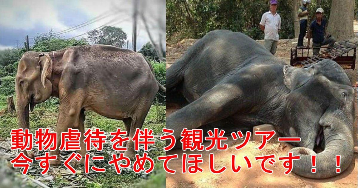 3 90.jpg?resize=1200,630 - 毎日観光客を乗せてあげた結果…骸骨のように激痩してしまった「奴隷」の象