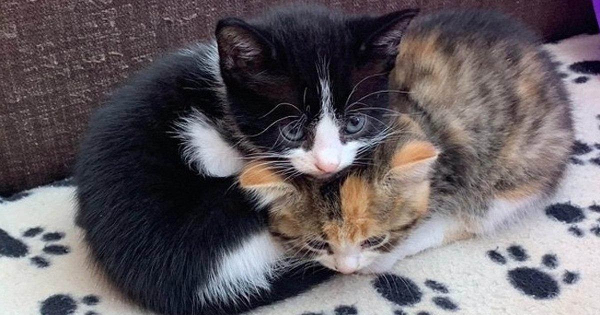 4 120.jpg?resize=1200,630 - 25 Fotos que demuestran que los gatos son criaturas realmente lindas