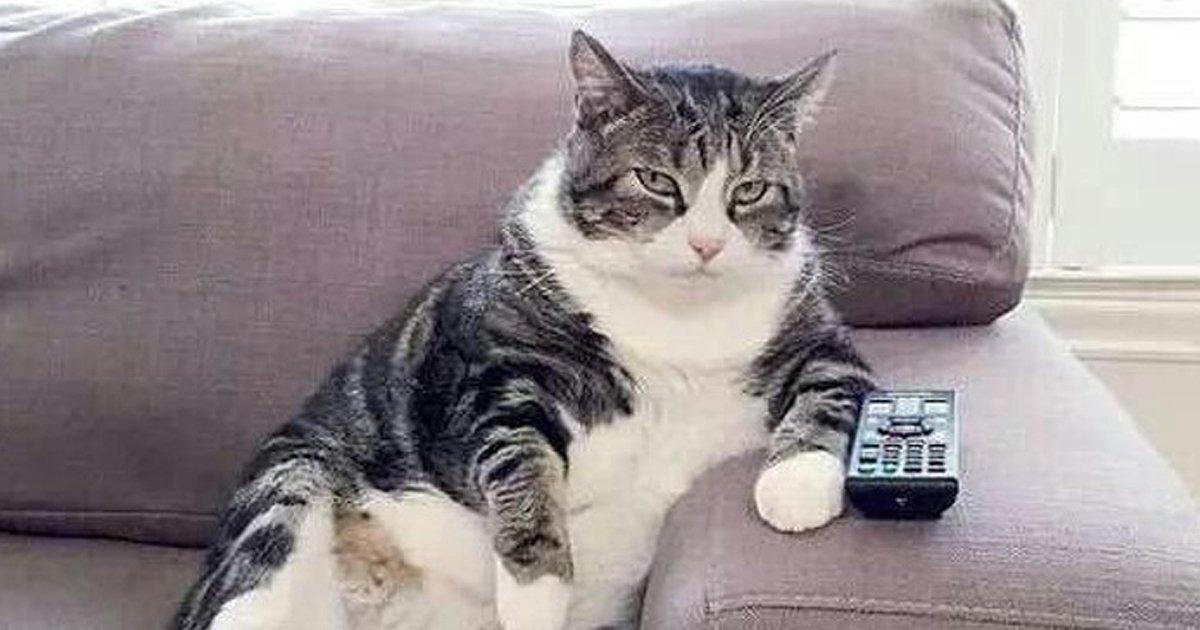 4 148.jpg?resize=1200,630 - 22 Fotos que demuestran que los gatos pueden ser unos verdaderos cretinos