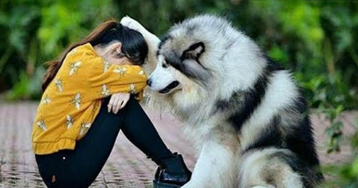 4 153.jpg?resize=1200,630 - 26 Reasons Why Dogs Are the Best Things in This World