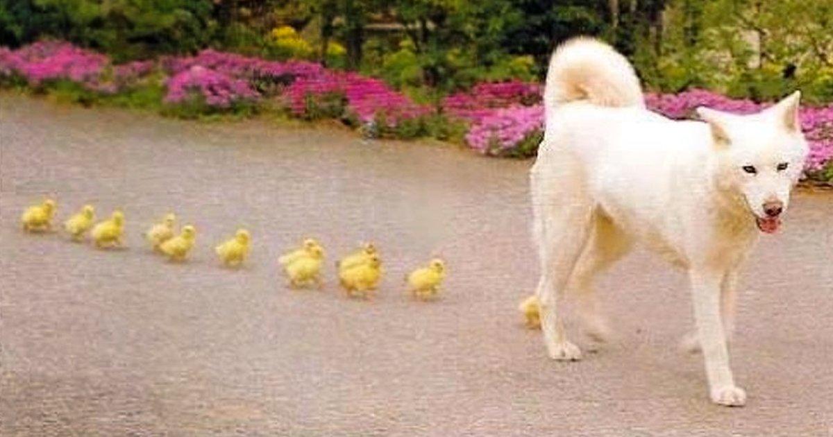 4 16.jpg?resize=1200,630 - Los animales decidieron mostrarnos de qué se trata la maternidad y no podemos dejar de vernos reflejados en ellos