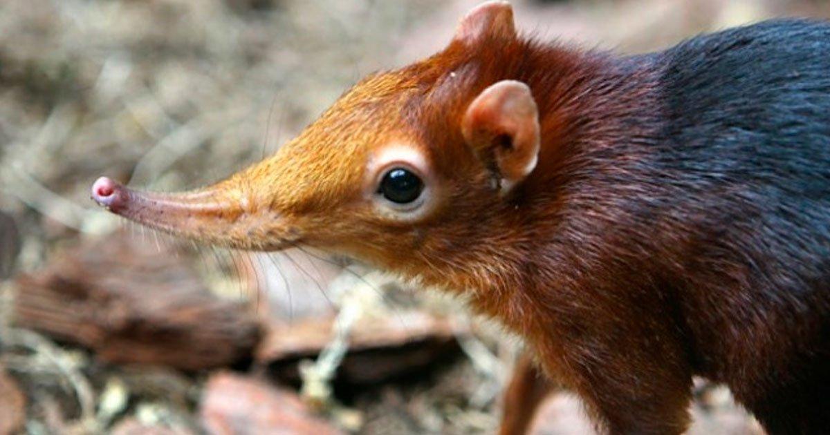 4 247.jpg?resize=1200,630 - 15 Animales que fueron descubiertos recientemente