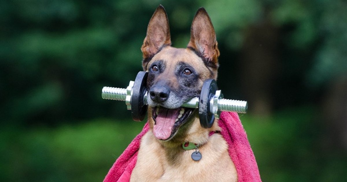 4 31.jpg?resize=1200,630 - 22 Tesoros que estos perros les dieron a sus dueños