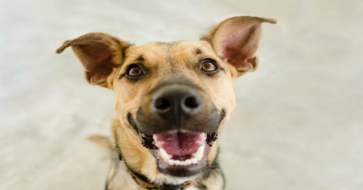 4 92.jpg?resize=636,358 - 53 erreurs que chaque propriétaire de chien fait.