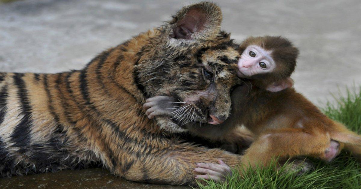 4 96 1.jpg?resize=1200,630 - 27 photos d'animaux qui font fondre nos cœurs