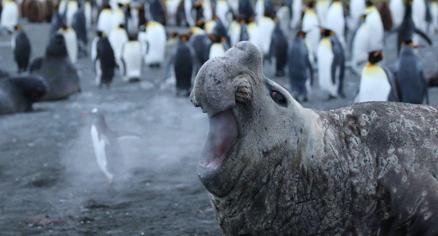 Walrus Breath