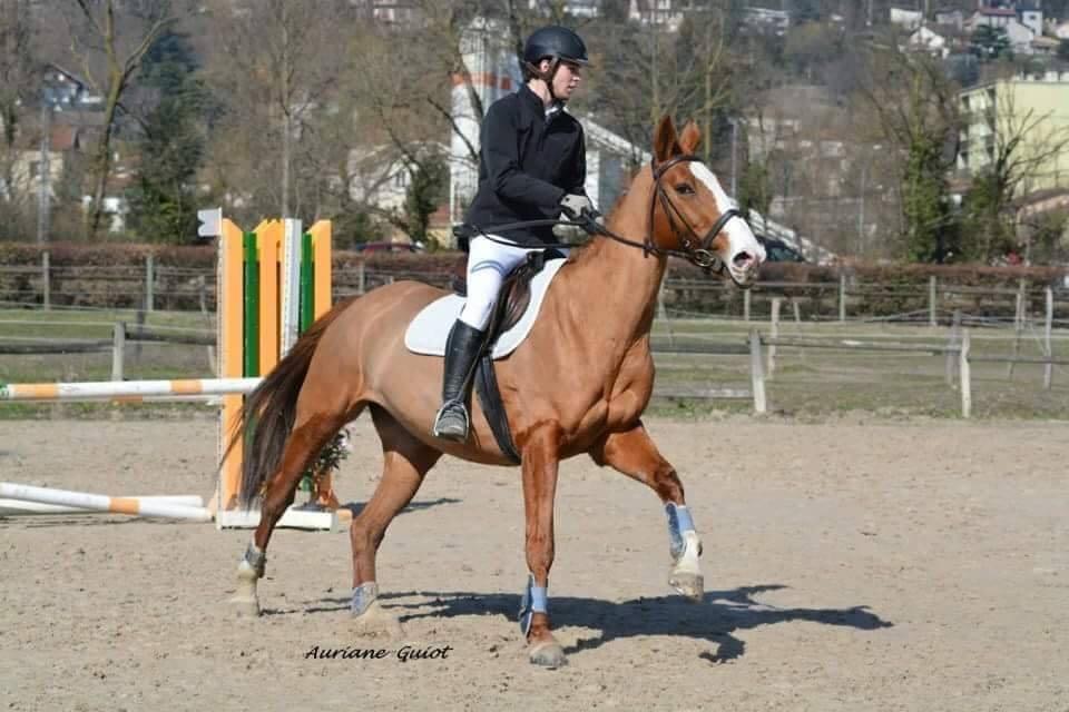 41519881 527763087668221 5562927167462965248 n.jpg?resize=412,232 - Dans l'Ain, 12 chevaux sauvés de l'abattoir grâce à l'argent récolté sur Internet.