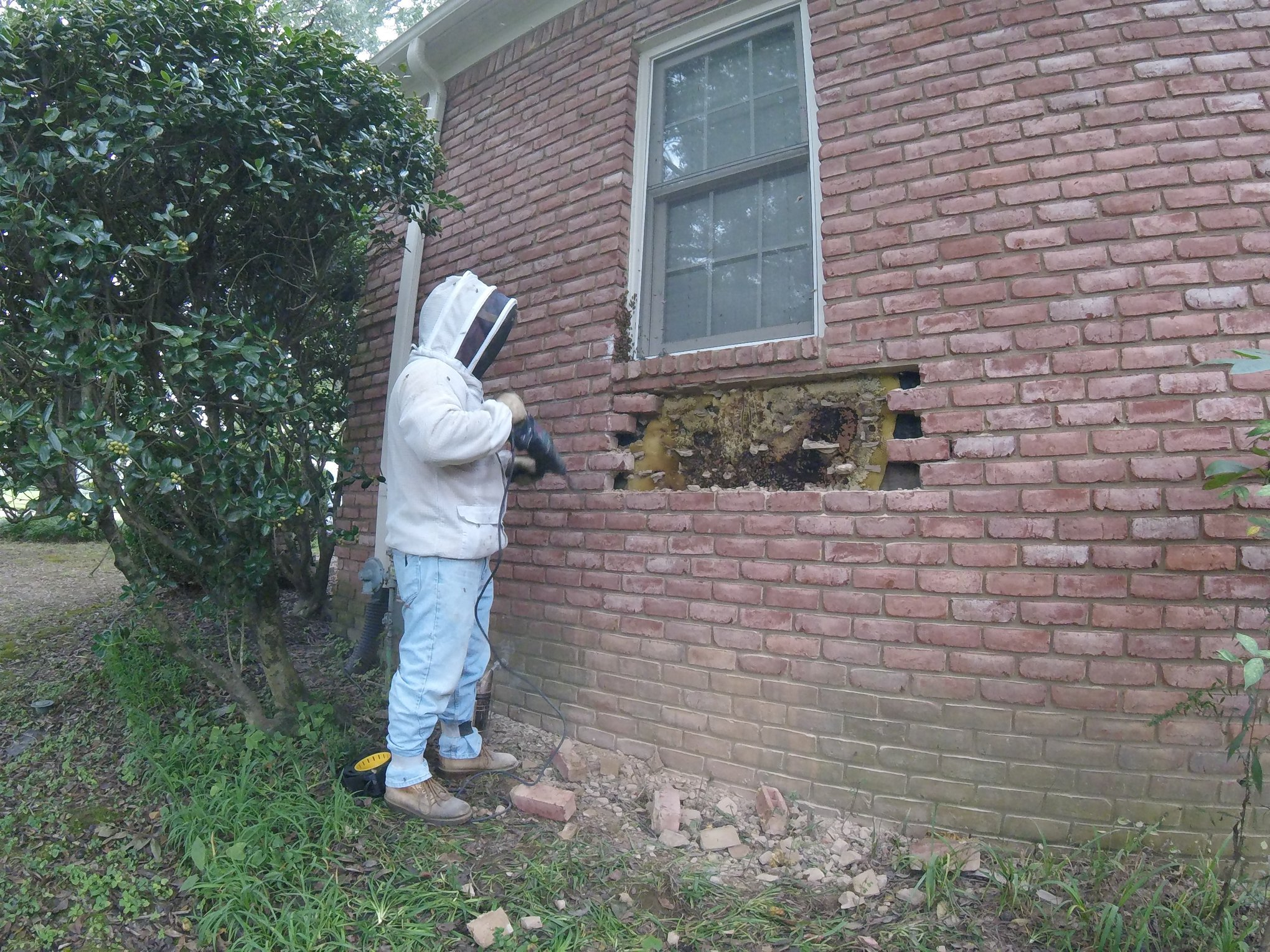 42743399 2000275516660830 7014229413151637504 o.jpg?resize=412,232 - L'un des murs de sa maison renfermait une ruche géante!
