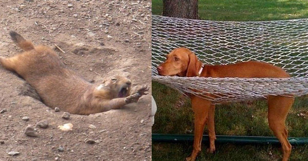 5 117.jpg?resize=1200,630 - 20+ photos hilarantes d'animaux si maladroits qu'il est difficile de s'arrêter de rire.