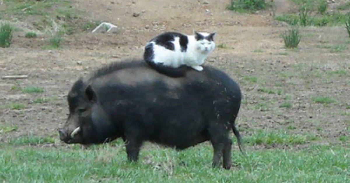 5 119.jpg?resize=1200,630 - 20+ Animales rebeldes y orgullosos a los que no les importan las reglas humanas
