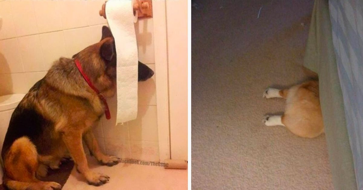 5 188.jpg?resize=1200,630 - 10+ Hilarious Dogs Who Think They'd Be Impossible To Find In Hide And Seek