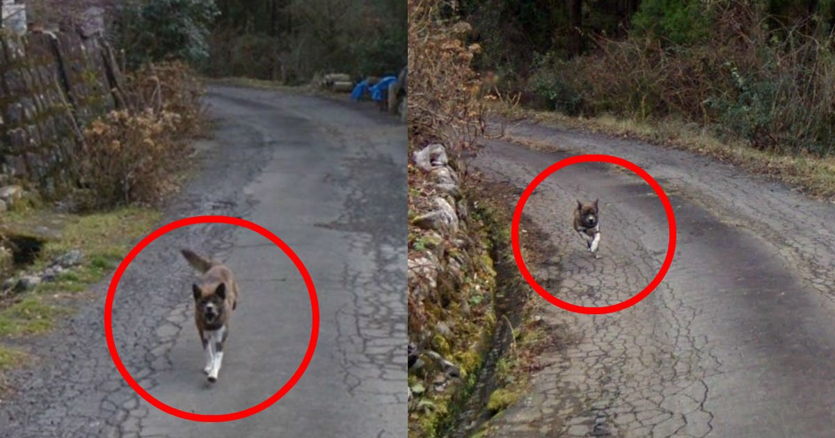 5 60.jpg?resize=636,358 - 「捨てられた」ことを知らずに連れていってほしいと飼い主を追いかける犬