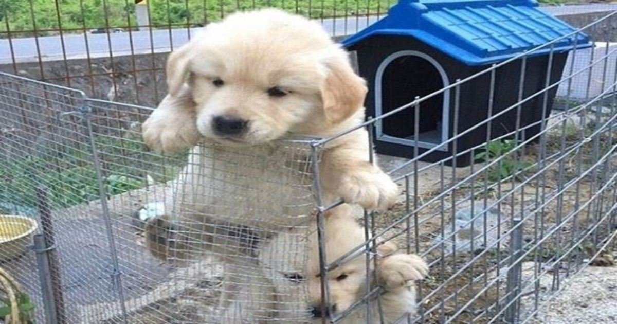 5 66.jpg?resize=1200,630 - 20 Adorable Escape Artists Who Would Make Houdini Proud