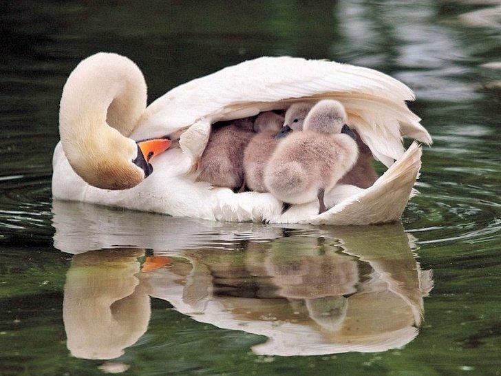 5321360 8n8kxpu 1538635149 728 bc340c8208 1539573567.jpg?resize=412,275 - 12 fotos que mostram a linda relação de mamães com seus filhotes no reino animal