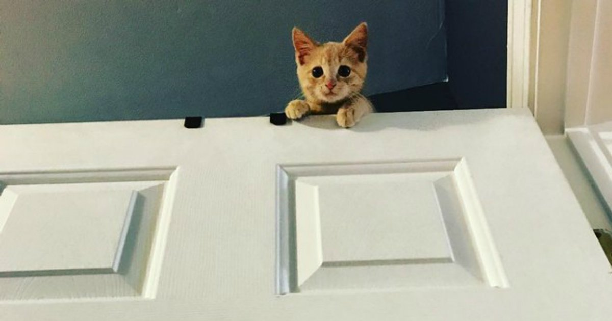 6 140.jpg?resize=1200,630 - 17 Photos That Basically Prove Cats Are Just Furry House Monkeys
