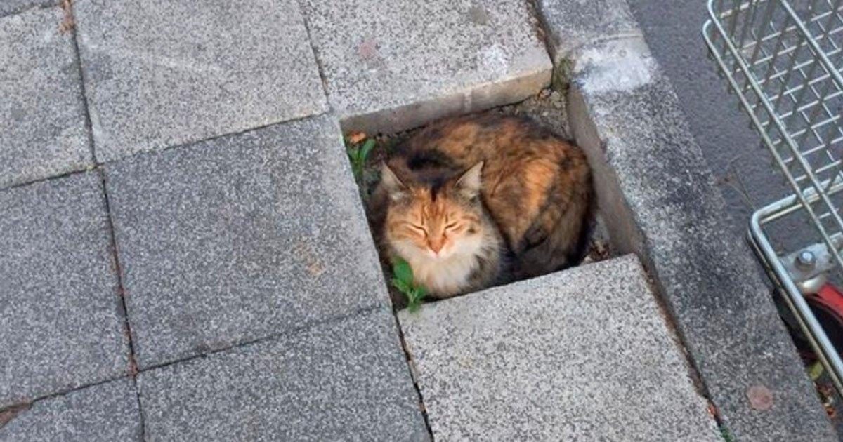 6 179.jpg?resize=1200,630 - 17 Animales que saben encontrar el lugar más acogedor del mundo