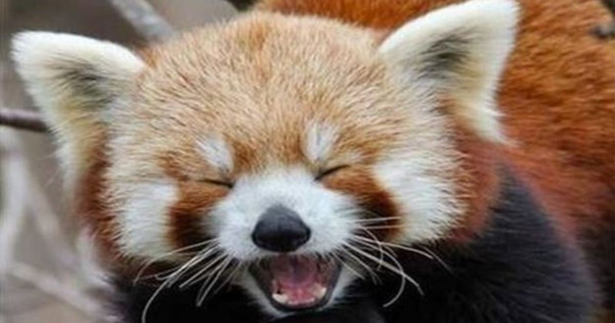 6 19.jpg?resize=636,358 - The 23 Best Animal Smiles You'll See Today