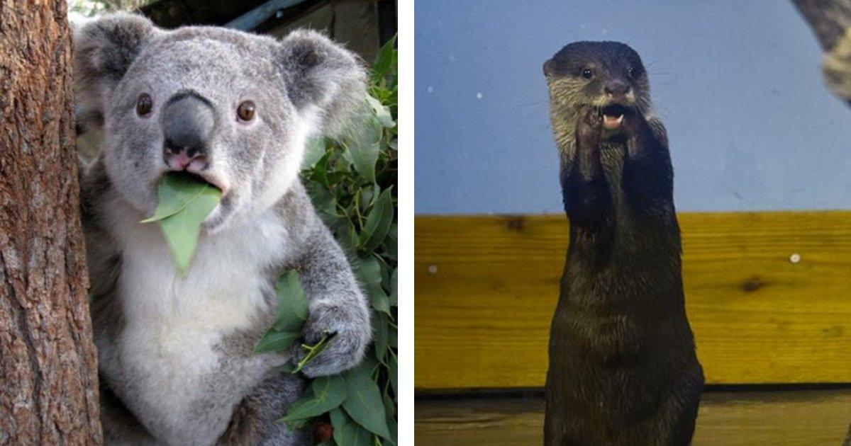 6 200.jpg?resize=1200,630 - 23 Hilarious Photos Of Surprised Animals