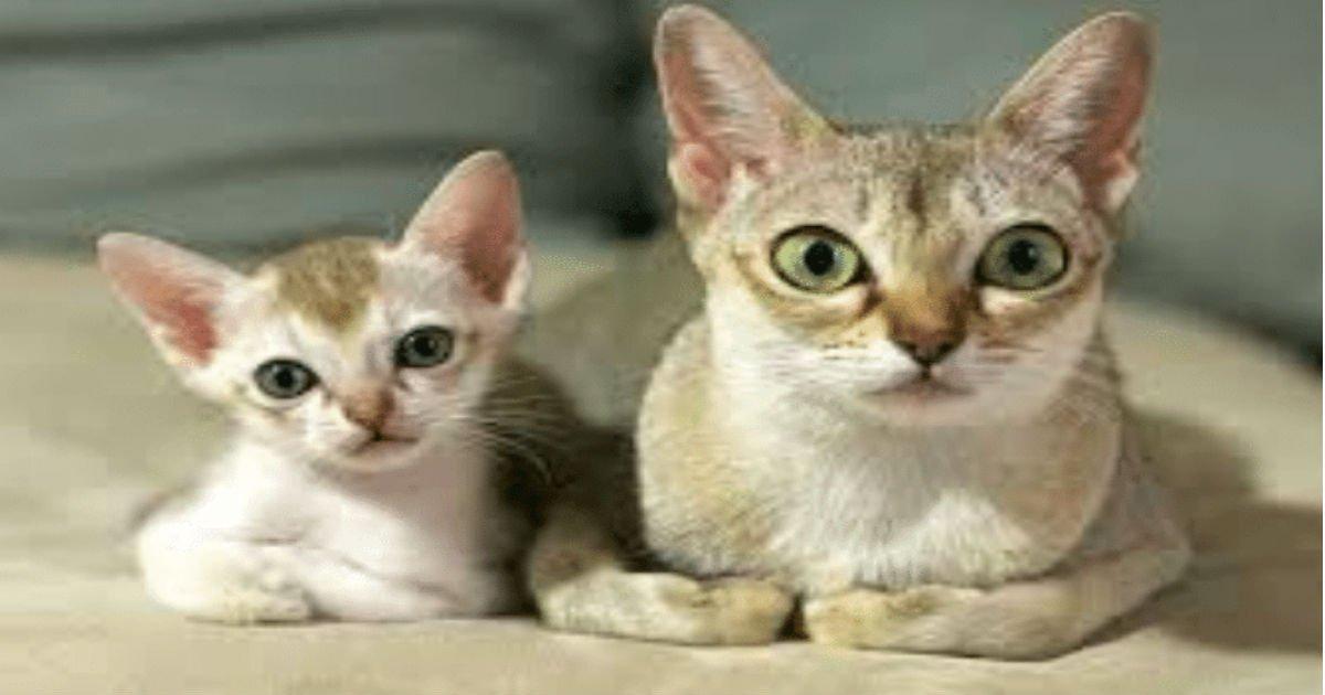 6 21 1.jpg?resize=1200,630 - 40+ chats et leurs modèles réduits!