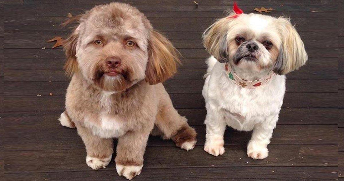 6 24.jpg?resize=1200,630 - 10+ Perros tan parecidos a los humanos que provocan algo de confusión