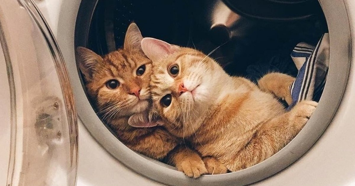 6 40.jpg?resize=1200,630 - 21 Momentos en los que los gatos nos hicieron sonreír de oreja a oreja