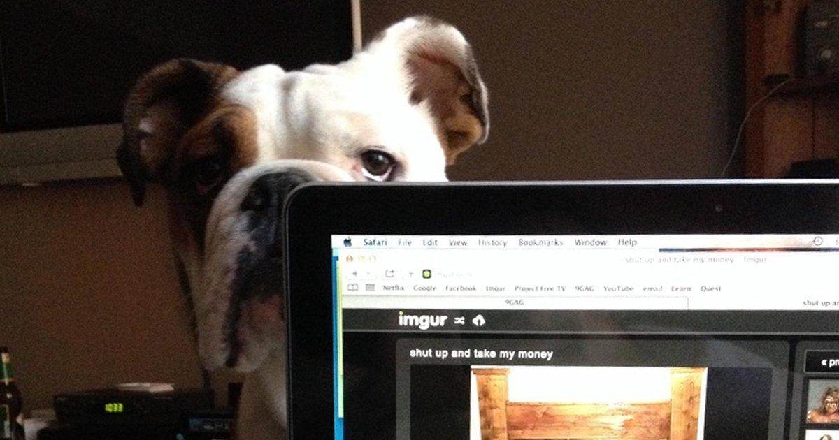 6 79.jpg?resize=636,358 - 19 Fotografías que demuestran que los celos vienen en todas las formas y tamaños, incluso en gatos y perros